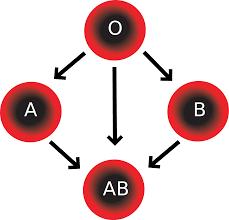 Blood type1