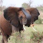 Elephants can't jump….