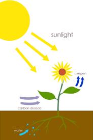excretion in plant 1