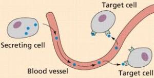 Hormones and glands1