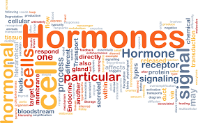 Hormones and glands: Major points you ought to know.