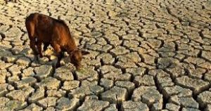 animals, food shortage,