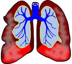 lungs,breathing,respiratory