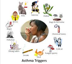 asthma,lungs