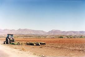 Dry farming: Cultivation without irrigation