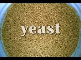 yeast,fungi, bacteria, bread , alcohol