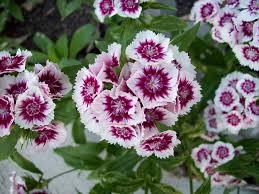 annual,biannual,perennial, plant