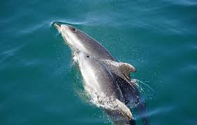 Dolphins: Know more about them