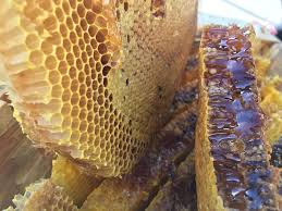 honey,bees,antioxidant, burn