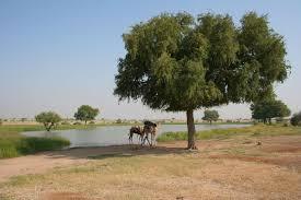 oasis,palm tree,desert