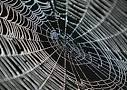 spider silk, cobweb, strong, web
