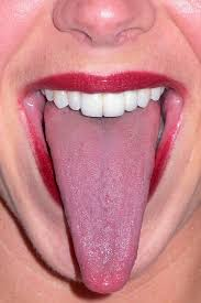 tongue,muscle, organ,taste,digestion