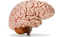 The important parts of the brain23