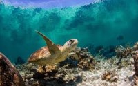 Undersea1
