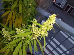 male plant, female plant, reproduction