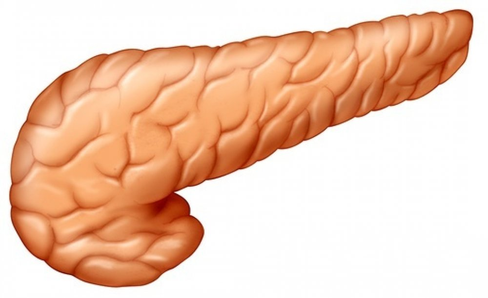 Pancreas Essential Points Ought To Be Known Attemptnwin