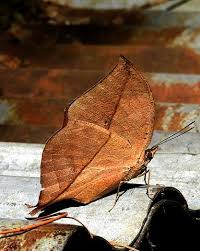 dead leaf, insect