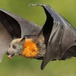 3D neural compass cells enable our navigation: Bats