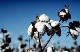 cotton, plant, seed, fabric