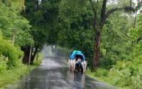 monsoon 3