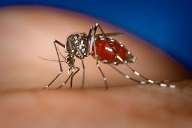 Chikungunya: Essential points ought to be known