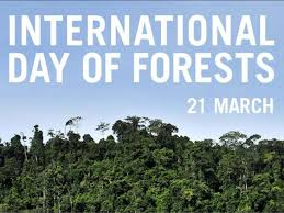 The International Forest Day- 21 March