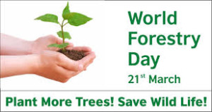 The International Forest Day, March 21, 21 March 2017, forest, tree, renewable energy, wood energy,  temperature,  global warming,  energy,  united nations, awareness,  Food and Agriculture Organization,  carbon dioxide,  climate change
