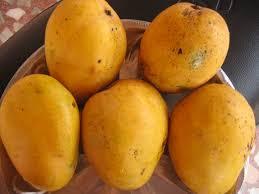 Mango, fruit, most eaten fruit, tropical food, fiber, antioxidants, Beta-carotene, asthma, constipation, enzyme, vitamin C, LDL, cholesterol, alkali reserve